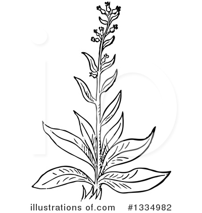 Herb Clipart #1334982 by Picsburg