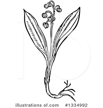 Royalty-Free (RF) Herb Clipart Illustration by Picsburg - Stock Sample #1334992
