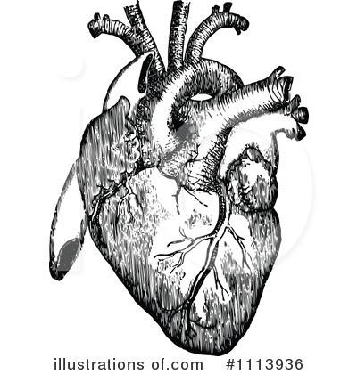 Human Heart Clipart #1113936 - Illustration by Prawny Vintage