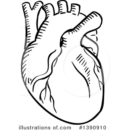 Human Heart Clipart #1390910 - Illustration by Vector ...