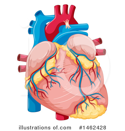 Human Heart Clipart #1462428 - Illustration by Graphics RF