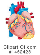 Human Heart Clipart #1462428 by Graphics RF