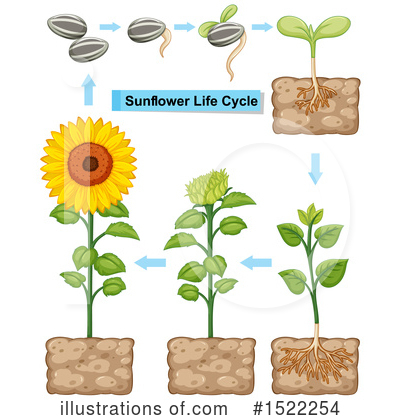Sunflower Clipart #1522254 by Graphics RF