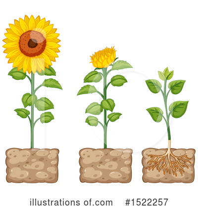 Sunflower Clipart #1522257 by Graphics RF