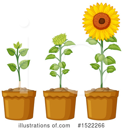 Sunflower Clipart #1522266 by Graphics RF