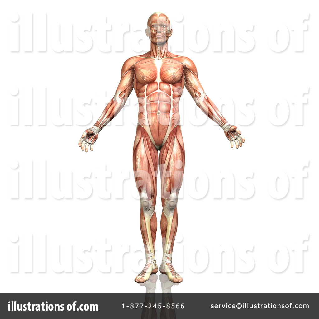 Anatomy Clipart 1300902 Illustration By Kj Pargeter