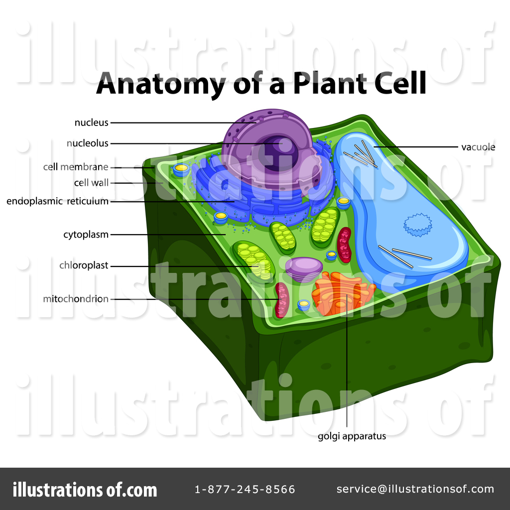 Biology Clipart 1464028 Illustration By Graphics Rf