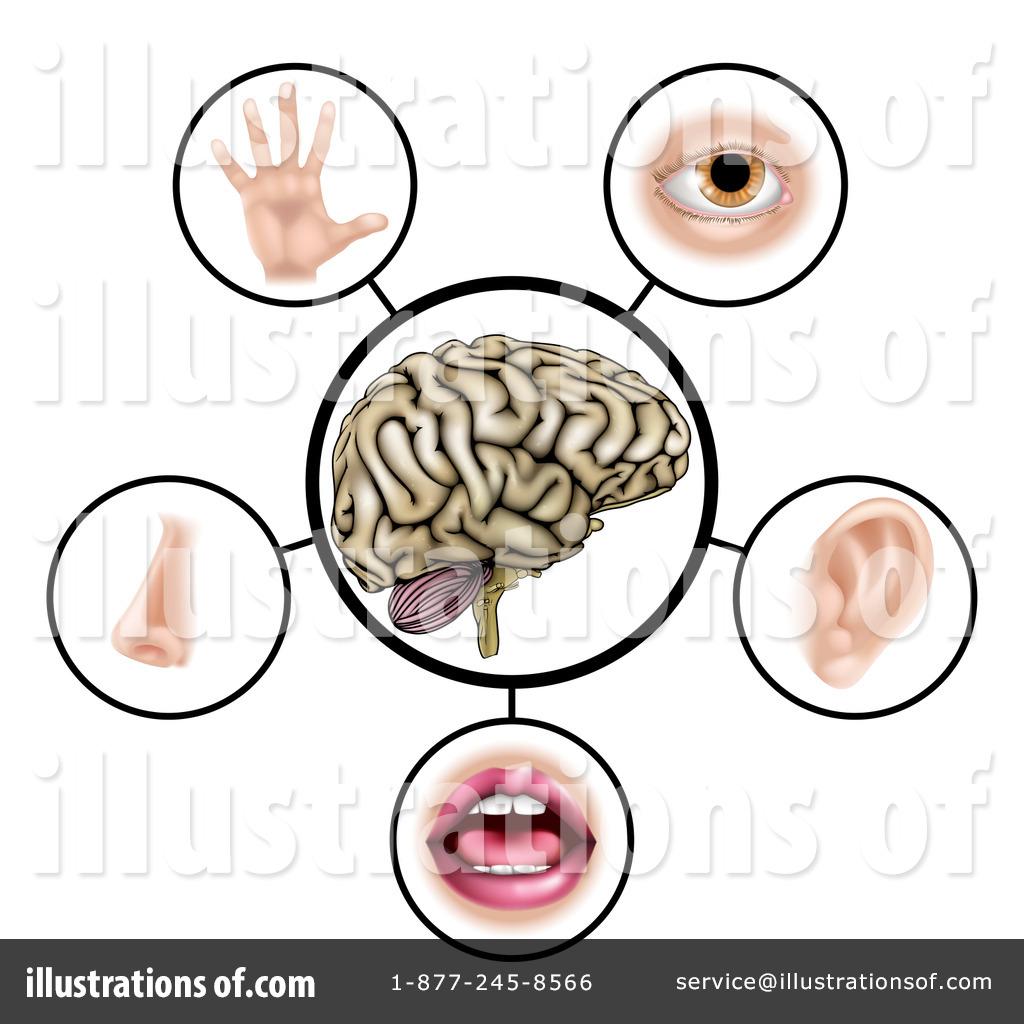 Five Senses Clipart #1267819 - Illustration by AtStockIllustration