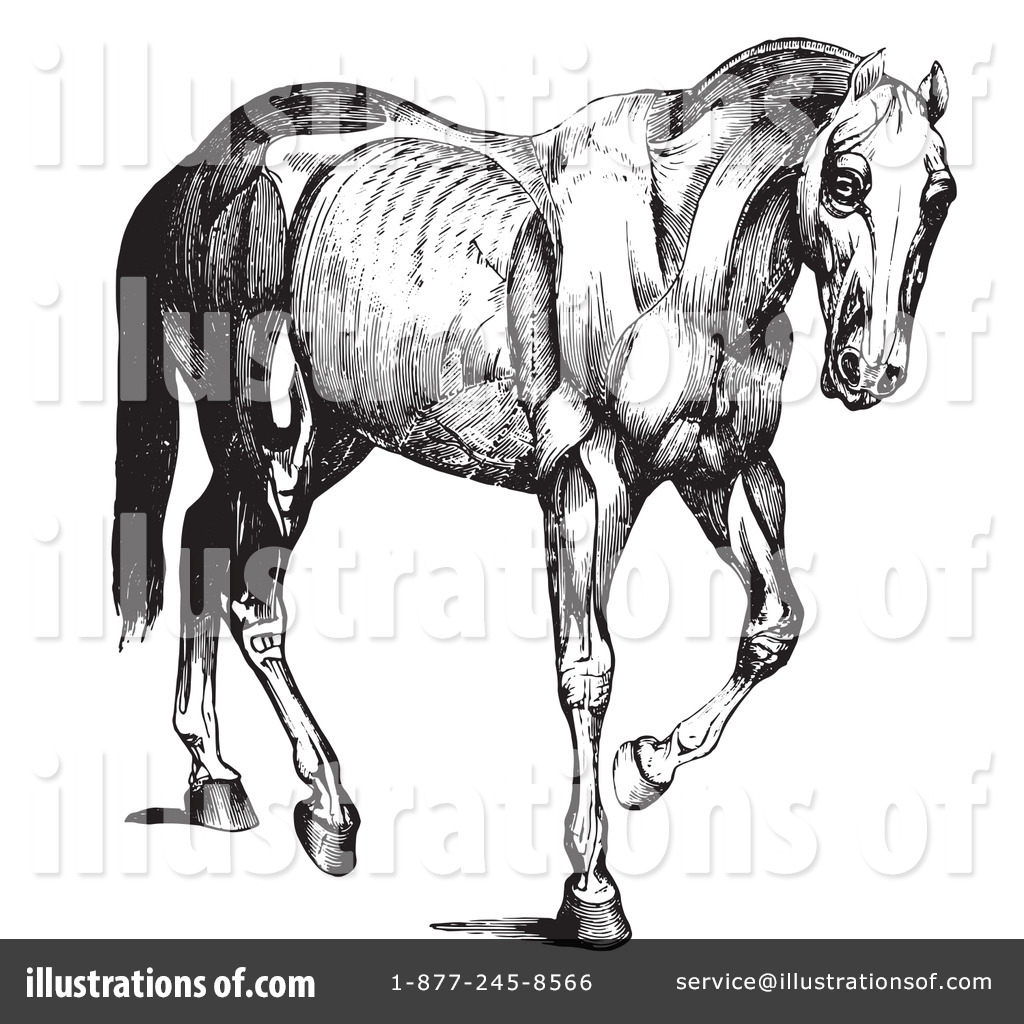 Horse Anatomy Clipart #1130599 - Illustration by Picsburg