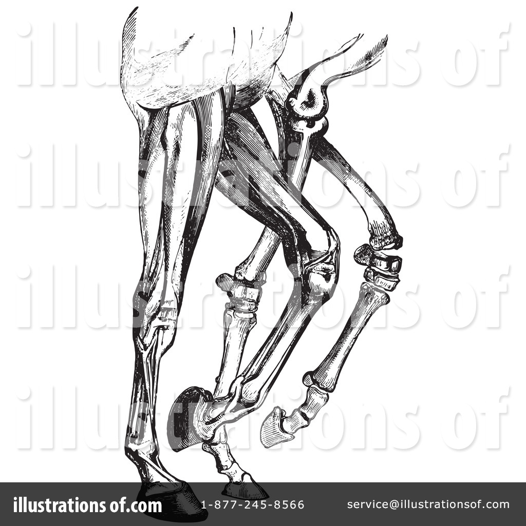 Horse Anatomy Clipart #1130608 - Illustration by Picsburg