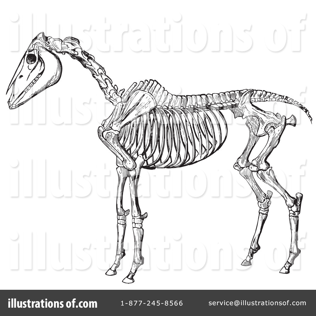 Horse Anatomy Clipart #1135833 - Illustration by Picsburg