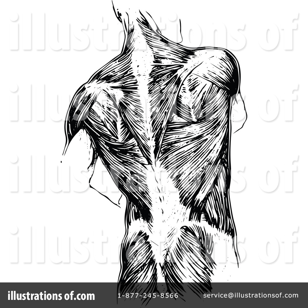 Human Anatomy Clipart #1113253 - Illustration by Prawny Vintage