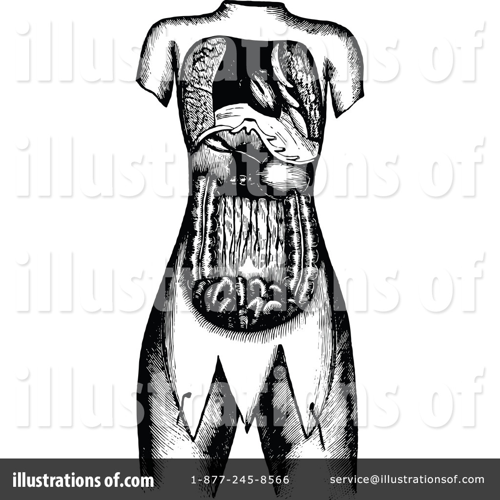 Human Anatomy Clipart #1116901 - Illustration by Prawny Vintage