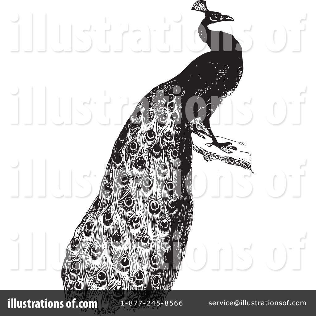 388c90a5147 Royalty-Free (RF) Peacock Clipart Illustration  1101518 by BestVector
