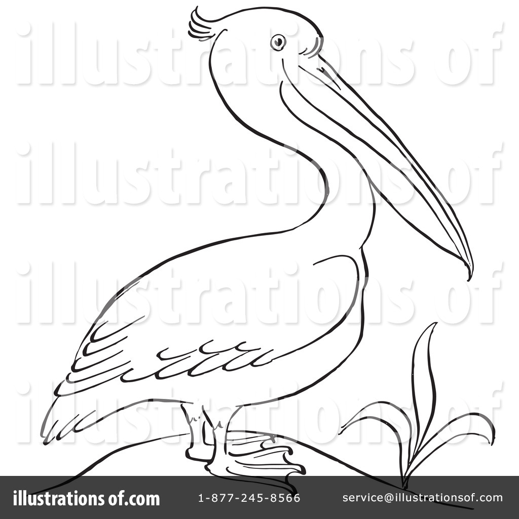 Pelican Clipart 1129237 Illustration By Picsburg