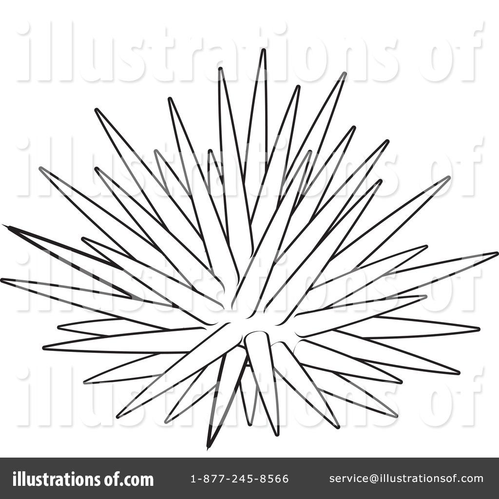 Sea Urchin Clipart Illustration Alex Bannykh