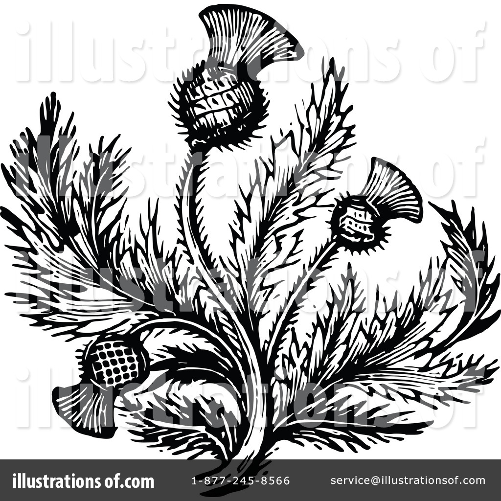 Thistle Clipart #1145936 - Illustration by Prawny Vintage