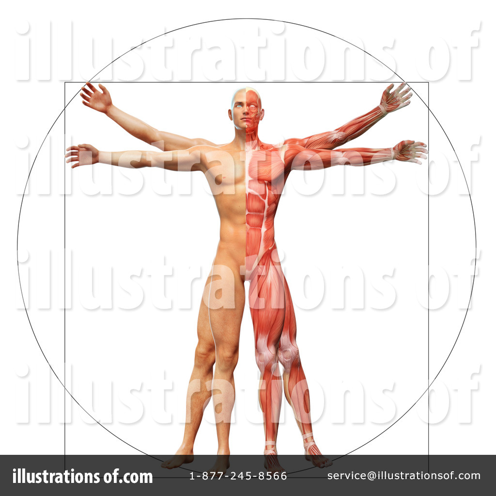 Vitruvian Man Clipart #1172010 - Illustration by Mopic