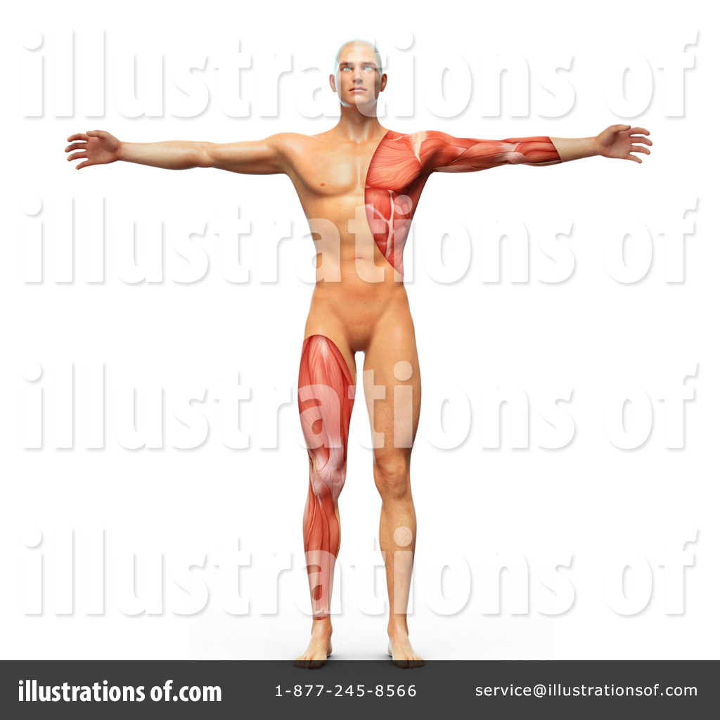 Vitruvian Man Clipart #1172011 - Illustration by Mopic