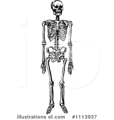 Skeleton Clipart #1113937 - Illustration by Prawny Vintage
