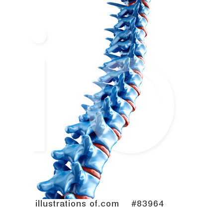 spinal vertebrae clip art – clipart free download