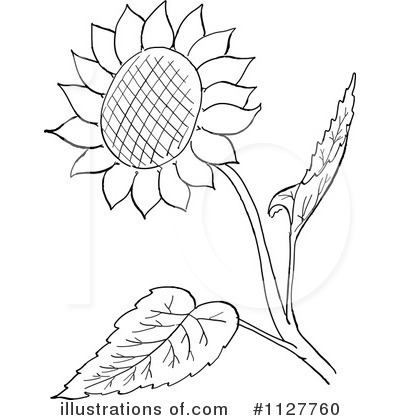 Royalty Free RF Sunflower Clipart Illustration 1127760 By Picsburg